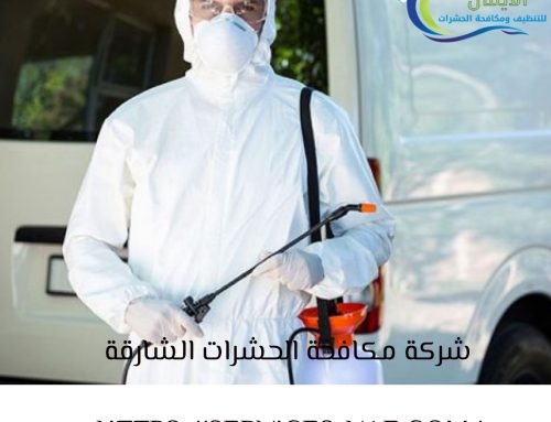 شركة مكافحة الحشرات الشارقة  0561581557 ابادة الحشرات